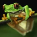Tree Frog Gallery