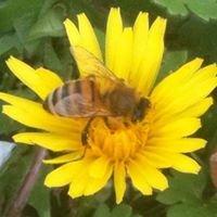 Golden Delight Honey