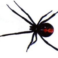 Redback Specialised Computer Services