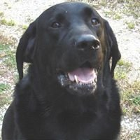 Cottonwood Creek Veterinary Services