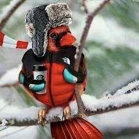 Wild Birds Unlimited Rochester Hills