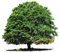 Lake Charles Tree Service