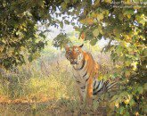Tadoba Tour Packages