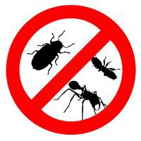 Pest Extermination in Melbourne