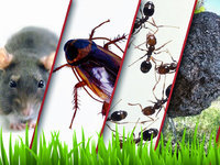 Cheap Pest Control Melbourne
