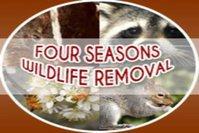 Four Seasons Wildlife Removal - Raccoon Removal Markham