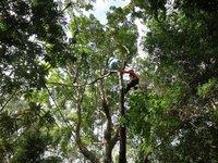 Aussie Tree Care