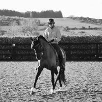 JDL Equestrian