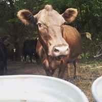 Renewed Pastures Farm