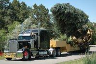 Colorado Tree Spade