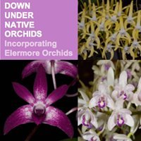 Down Under Native Orchids