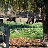 Boronia Farm