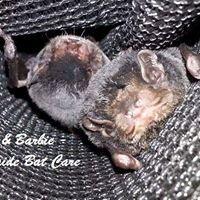 Adelaide Bat Care