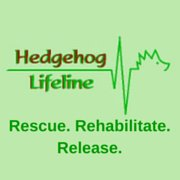 Hedgehog Lifeline