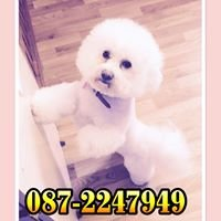 Julie Curtin's Dog Grooming