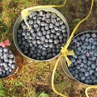 Timberlane Blueberry Farm