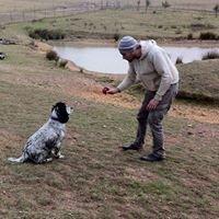 Yass Pets - Pets Accommodation