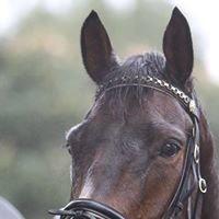 Champion-Equine.com