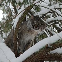 Michigan Predator-Prey Project