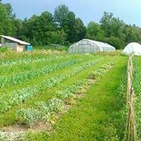 Home-Grown Garden