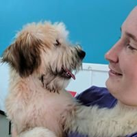 Phenom A Dog - Dog Daycare Boarding & Training
