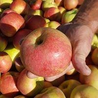 Carluke Orchards