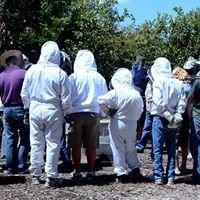 Terrey Hills Bee Garden