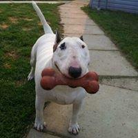 Pupado's Dog Grooming