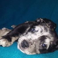 Rescue Pups