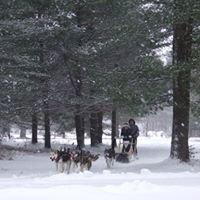 Call of the Wild Dog Sled Tours