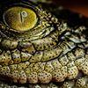 Marineland Melanesia Croc Park Green Island