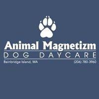Animal Magnetizm Dog Daycare