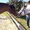 RC Horses Aps