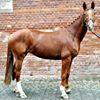 Ruskowscy sport horses - Sprzedaż koni sportowych