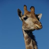 Giraffe House Wildlife Awareness Centre