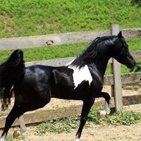 SMHC Miniature Horses