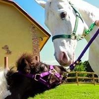 Skywalker Miniature Horse Farm