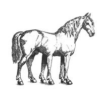 des cheval