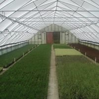 Kessel's Nursery LLC-wholesale grower