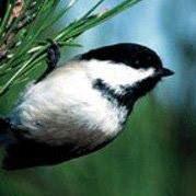 Audubon Advocacy