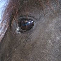 Jo Bunny ~  HorseBack & Body: Massage Therapy for Horses & Humans