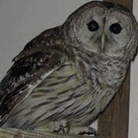 Avian Wildlife Center