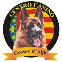 Gossos d'Alpe Sollana
