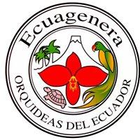 Ecuagenera Orquideas Del Ecuador