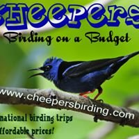 Cheepers! Birding on a Budget