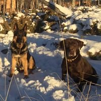 Find It Detection Dogs