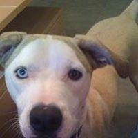 For Peetey's Sake Dog and Cat Rescue, Inc.