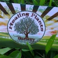 Healing Plants Nursery