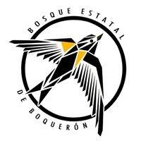 Bosque Estatal de Boqueron