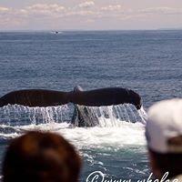 Whales n Sails Adventures